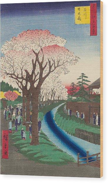 Cherry Blossoms On The Tama River Embankment Wood Print