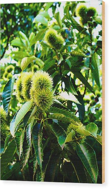 Chestnut Tree Wood Print by Michael C Crane