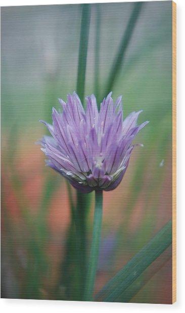 Chive Flower  Wood Print by Lisa Gabrius