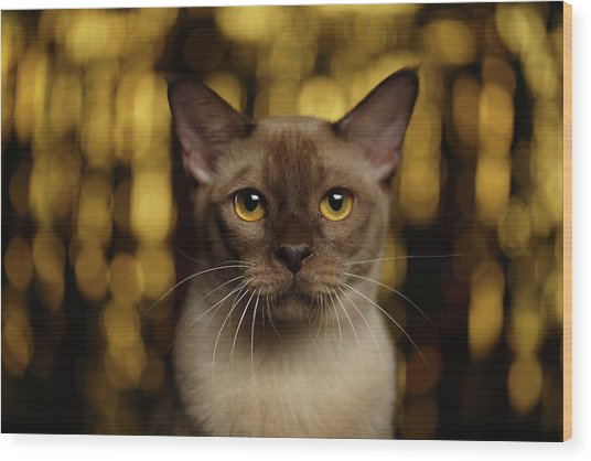 Closeup Portrait Burmese Cat On Happy New Year Background Wood Print