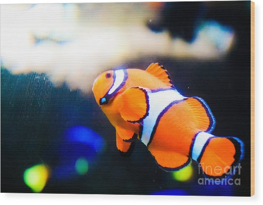 Clownfish Wood Print by Brenton Woodruff