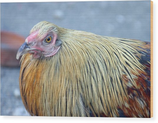 Cluck Wood Print by Jez C Self