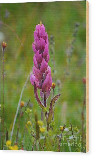 Wood Print featuring the photograph Colorado Wildflower by Kate Avery