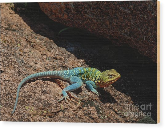 Colorful Lizard II Wood Print