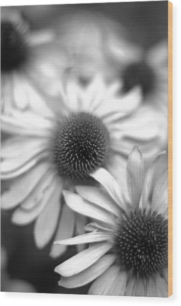 Cone Flower 7 Wood Print