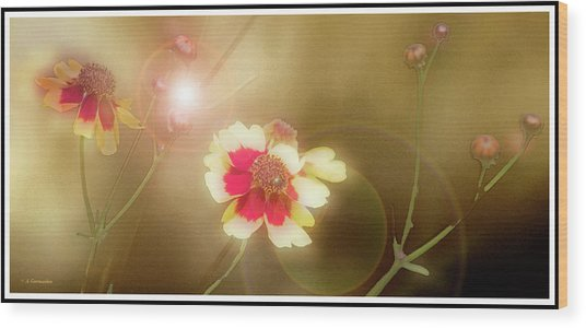 Coreopsis Flowers And Buds Wood Print