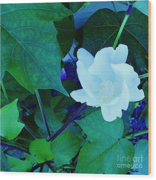Cotton Blossom Wood Print