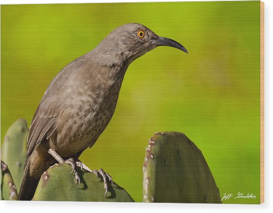 Curve-billed Thrasher On A Prickly Pear Cactus Wood Print