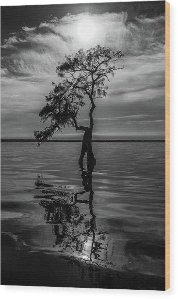 Cypress Reflections Wood Print
