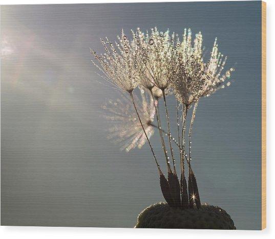 Dandelion Plumes Wood Print