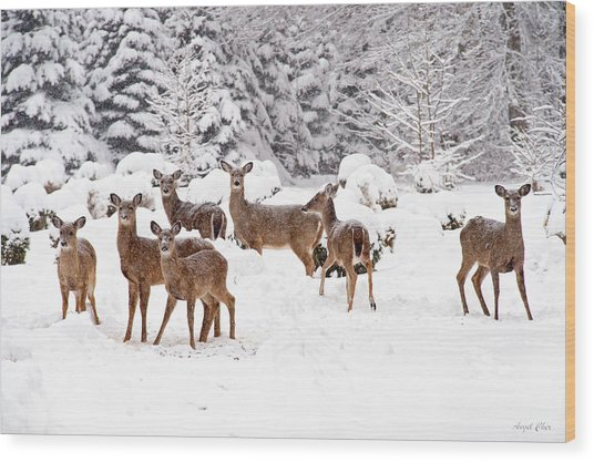 Wood Print featuring the photograph Deer In The Snow by Angel Cher