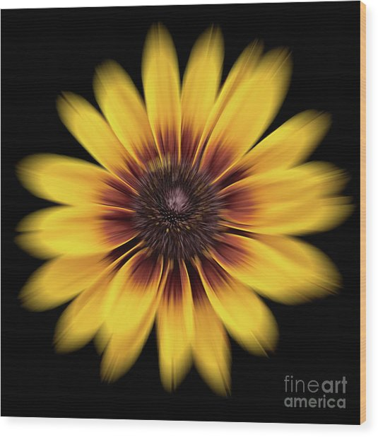 Wood Print featuring the photograph Denver Daisy by Ann Jacobson