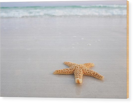Destin Florida Miramar Beach Starfish Wood Print