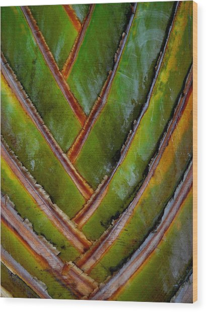 Diagonal Dance Wood Print by Donna McLarty