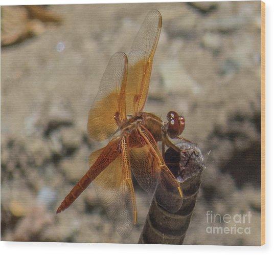 Dragonfly 18 Wood Print