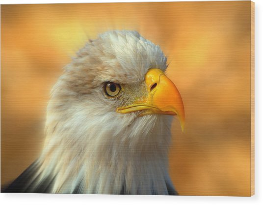 Eagle 10 Wood Print