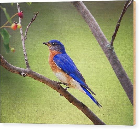 Eastern Bluebird Wood Print