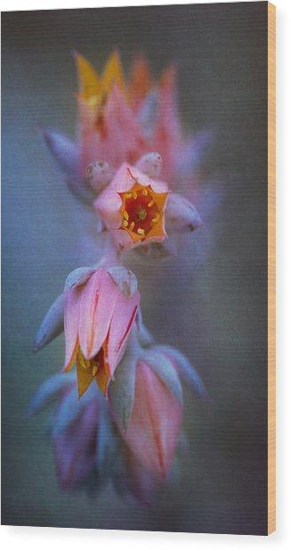 Echeveria Flowers Wood Print