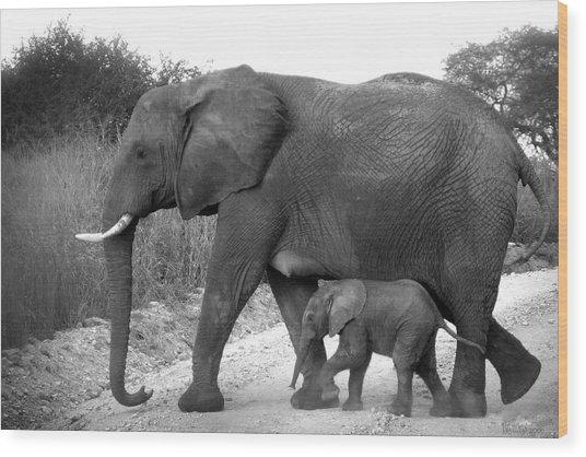 Elephant Walk Black And White  Wood Print