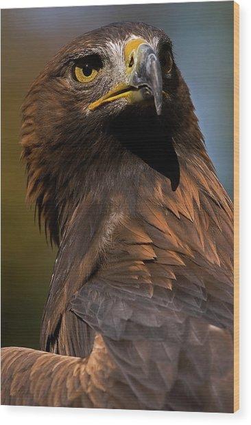 European Golden Eagle Wood Print