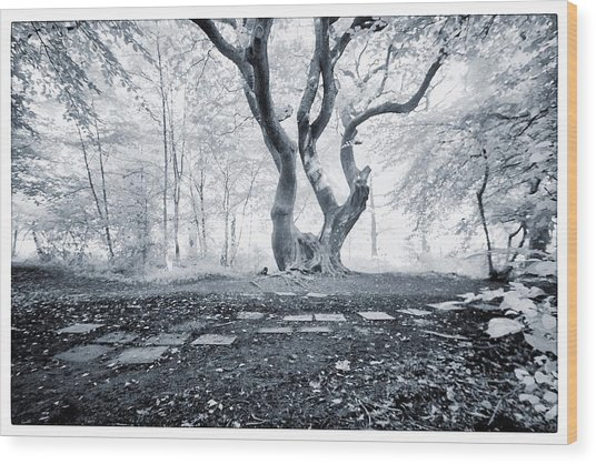 Fairy Tree Wood Print