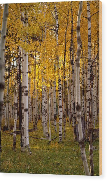 Fall At Snowbowl Wood Print