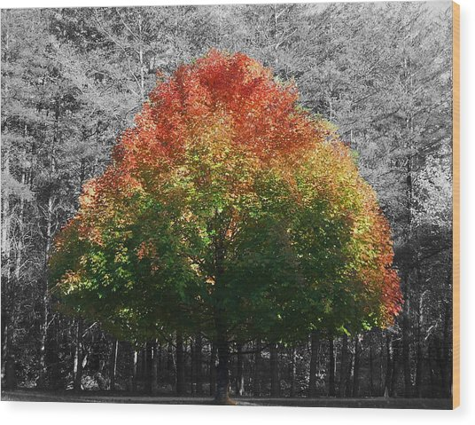 Fall In Bloom Wood Print by Navarre Photos