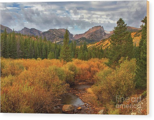 Fall In Rocky Mountain National Park Wood Print