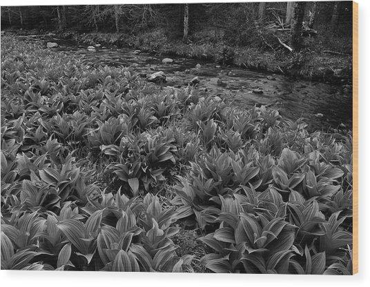 False Helebore Wood Print