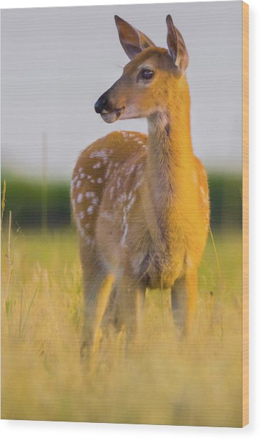 Wood Print featuring the photograph Fawn In Sunlight by John De Bord
