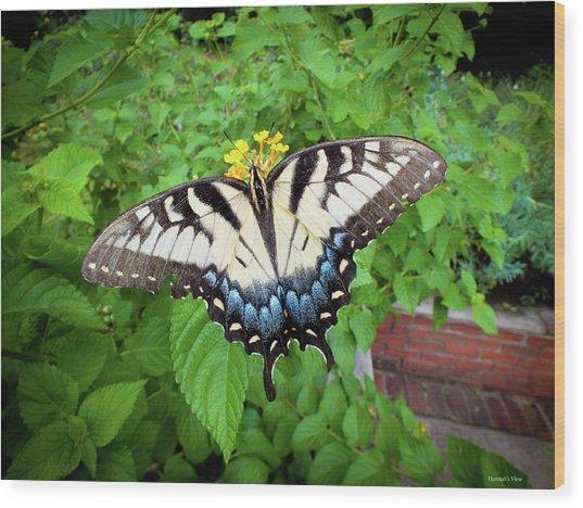 Female Eastern Tiger Swallowtail  Wood Print