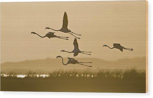 Flamingo Flight Wood Print by Basie Van Zyl