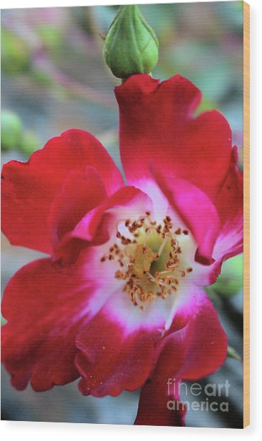 Flower Dance Wood Print