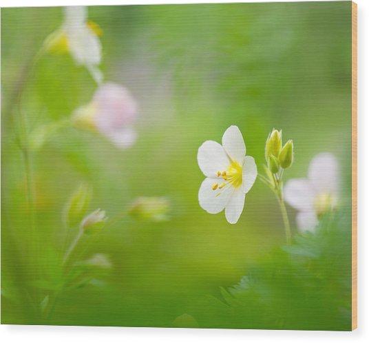 Flowers Whisper Beauty Wood Print