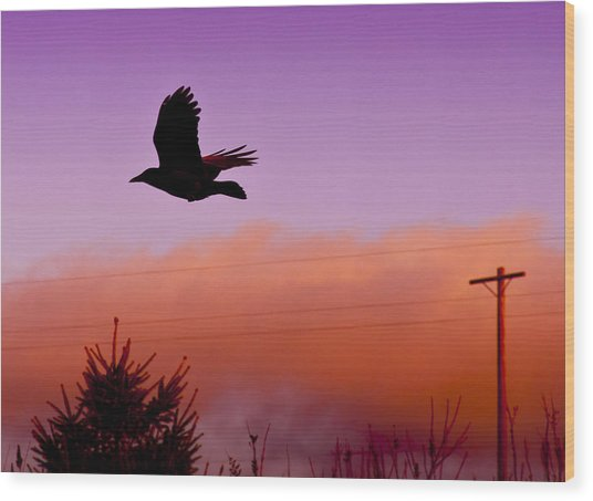 Fly By Wood Print by Chrissy Gibbs