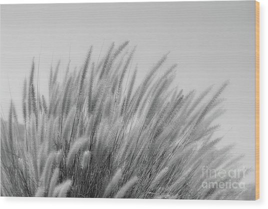 Foxtails On A Hill In Black And White Wood Print