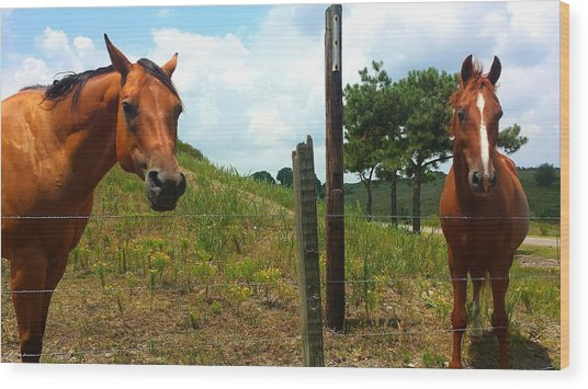 Friendly Stallions Wood Print