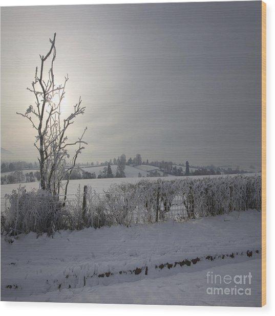 Frozen Britain Wood Print by Angel Ciesniarska