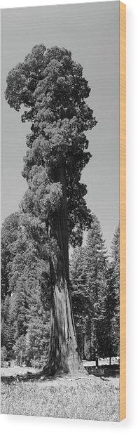 Giant Sequoia, Sequoia Np, Ca Wood Print