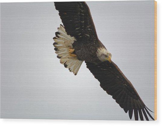 Gliding Wood Print