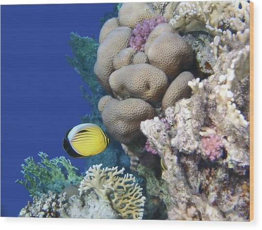 Glorious Red Sea World 3 Wood Print