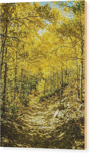 Golden Aspens In Colorado Mountains Wood Print