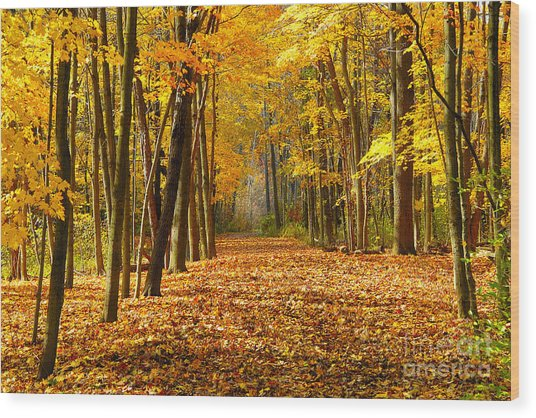 Golden Days Wood Print by Neil Doren