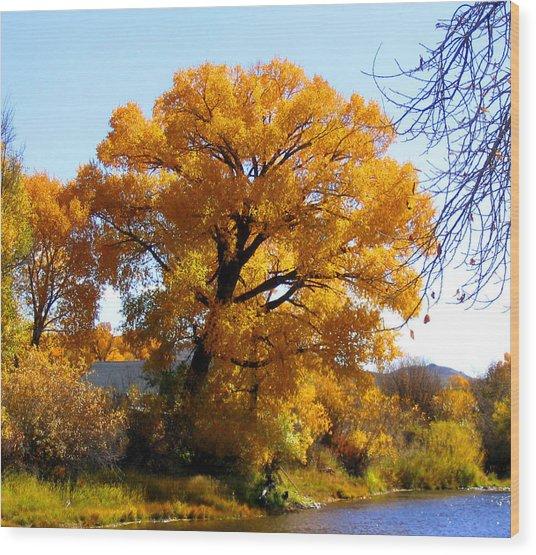Golden Tree Wood Print by Gigi Kobel