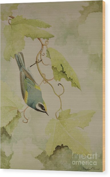 Golden-winged Warbler Wood Print