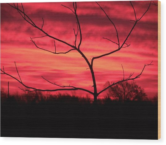 Good Evening Wood Print by Evelyn Patrick