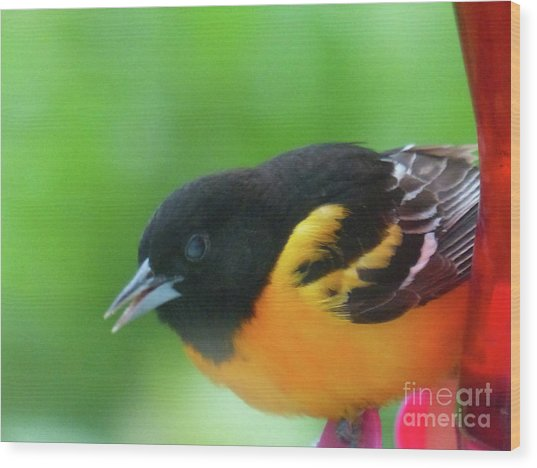 Good Morning Mr. Oriole Wood Print