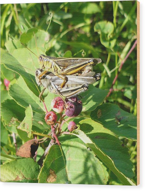 Grasshopper Love Wood Print