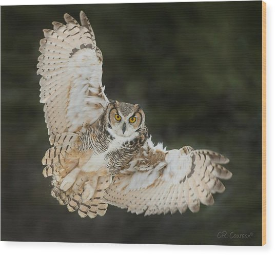 Great Horned Owl Wingspread Wood Print
