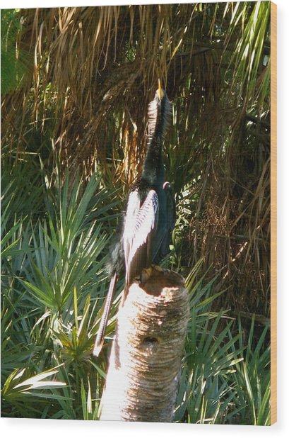 Green Cay Bird Wood Print by Fanny Diaz